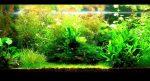 Tanaman Air Untuk Aquarium