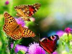 Bunga Favorit Lebah dan Kupu-kupu