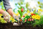 5 Tips Menanam Bunga yang Wajib Diketahui