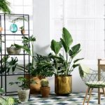 Tips Memilih dan Merawat Tanaman Indoors