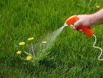 Cara Membasmi Gulma di Taman Rumah