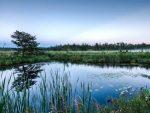 10 Tanaman Danau Air Tawar